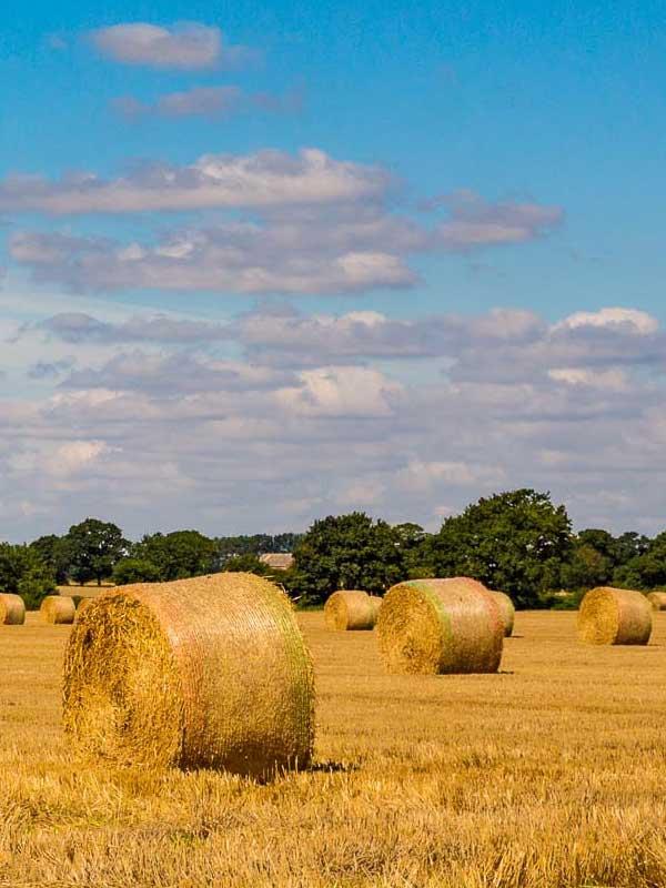 Rural Hay Bales Scene